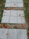 Path of Autumn. With fallen leaves in brown color royalty free stock photo