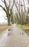 Path in autumn rainy park Royalty Free Stock Image