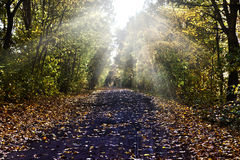 Path in autumn scenery Stock Image