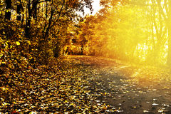 Path in autumn scenery Stock Images