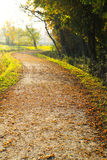 Path in autumn Royalty Free Stock Image