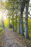 Path in autumn Royalty Free Stock Photography