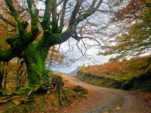 Path in autumn with a tree Stock Image