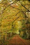Path through autumn trees Royalty Free Stock Photography