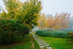 The path and autumn trees in fog Royalty Free Stock Photos