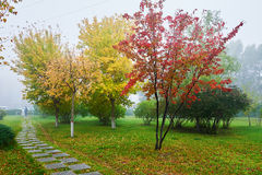 The path and autumn trees in fog Stock Photography