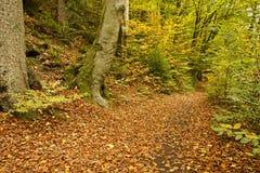Path through autumn trees. Path through forest with autumn foliage on sunny day Stock Photos