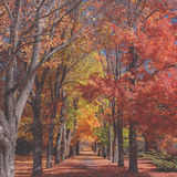 Path through autumn trees in park Stock Photos