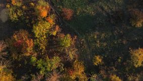Path among autumn trees. Aerial drone shot stock video footage