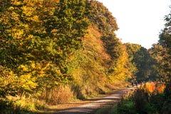 Path through autumn woodland Royalty Free Stock Photo