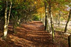 Path through Autumn Woodland in Surrey, England Stock Photography