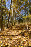 Path in the autumn woods Stock Image