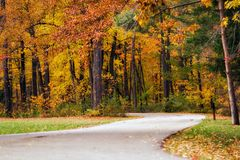 Path Autumn Woods Royalty Free Stock Photo