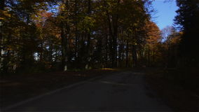 Path through Autumn Woods stock footage