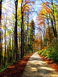 Path in autumn woods Royalty Free Stock Images
