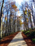 Path in autumn woods Royalty Free Stock Image