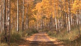 Path through autumn woods. Video of path through autumn woods stock footage