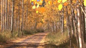 Path through autumn woods. Video of path through autumn woods stock video