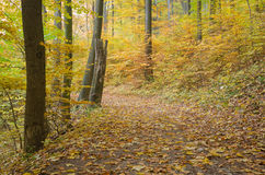 Path in the autumnal colorful forest Royalty Free Stock Photography