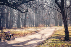Path through the autumnal park. The path through the autumnal park Royalty Free Stock Photo
