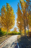 The path and autumnal trees Stock Photos