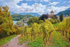 Path through autumnal vineyard spiez, switzerland royalty free stock photo