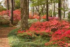 Path through the Azalea Garden. The through the azalea garden stock image