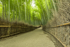 Path of Bamboo, Arashiyama, Kyoto, Japan. The Arashiyama Bamboo Grove is one of Kyoto's top sights and for good reason, standing amid these soaring stalks of Royalty Free Stock Photos