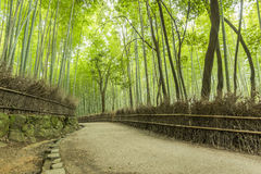 Path of Bamboo, Arashiyama, Kyoto, Japan. The Arashiyama Bamboo Grove is one of Kyoto's top sights and for good reason, standing amid these soaring stalks of Stock Photography