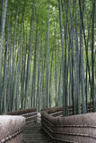 Path through a Bamboo Forest. This ia a bamboo forest near Kyoto, Japan. Bamboo is a fast growing grass and forms mysterious looking forests royalty free stock image