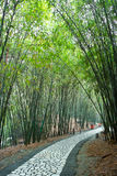 Path in bamboo forest Stock Photo