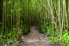 Path through Bamboo Forest Stock Photos