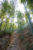 Path in bamboo forest Stock Images