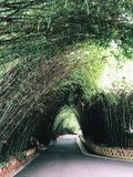 A path with bamboo forest growing on both sides. Inside Chengdu Research Base of Giant Panda in Chengdu city Sichuan province China royalty free stock photography