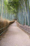Path and bamboo forest in Kyoto Japan Royalty Free Stock Photos