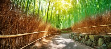 Path in bamboo forest in Kyoto, Japan. Woods in Arashiyama destrict Royalty Free Stock Photos