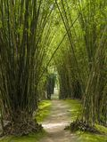 Path in a bamboo forest. In a tropical brazilian park Royalty Free Stock Photography