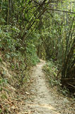 Path in bamboo forest Stock Image