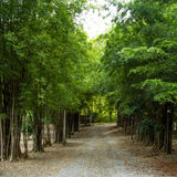 Path through bamboo Royalty Free Stock Image