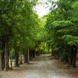 Path through bamboo Royalty Free Stock Image