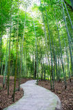 Path in the bamboo grove Royalty Free Stock Photo