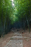 A path in bamboo groves Royalty Free Stock Images