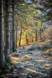 Path in Bavarian Alps Royalty Free Stock Images