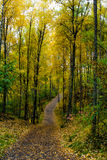 The Path. Beautiful Path with Fall colors Royalty Free Stock Image