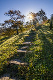 The path in a beautiful garden Stock Images