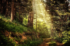 Path in the beautiful magic forest and sun rays Stock Photos