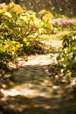 Path in the beautiful park Royalty Free Stock Photography