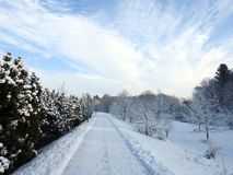 Path and beautiful snowy trees, Lithuania. Walking path and beautiful snowy trees in winter, can use as background stock photography