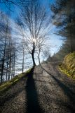 Path with beautiful sunlight in Pagasarri. Mountain royalty free stock photos