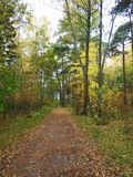 Path and beautiful trees in autumn, Lithuania Stock Images